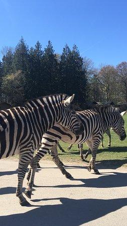 Knuthenborg Safari Park Maribo Danmark Anmeldelser