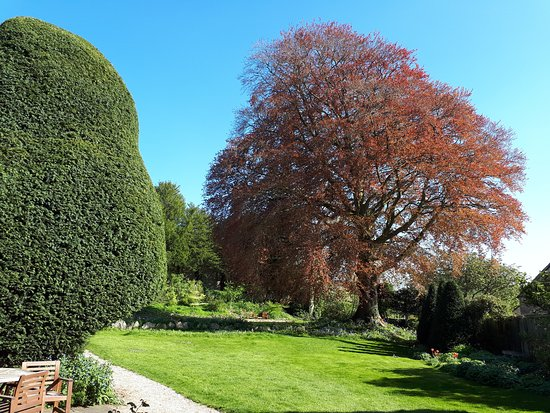 The Close - Bed & Breakfast: Copper Beech in Spring