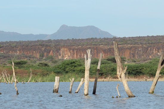 Lake Baringo: Cliffs surrounding the lake.  Years ago the lake was lower but now the water has risen covering some trees and buildings