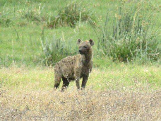 Amboseli National Park 사진