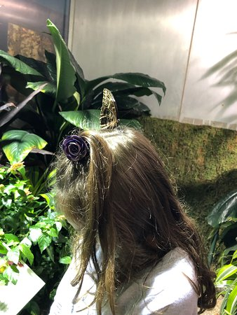 A butterfly lands on my 8 year old granddaughter's head - and stayed there for 15 minutes