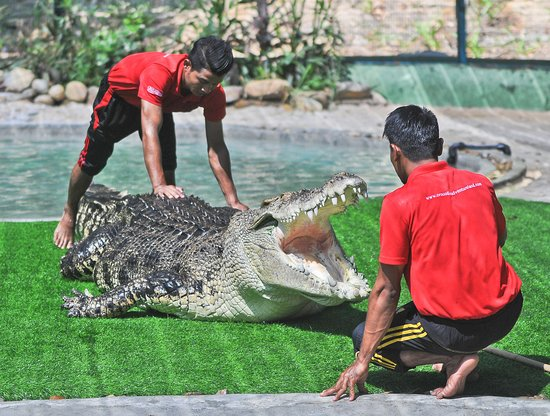 Crocodile Adventureland Langkawi: Giant Croc educational talk.
