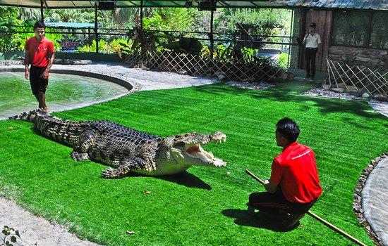 Crocodile Adventureland Langkawi: Educational talk here at Crocodile Adventureland Langkawi.