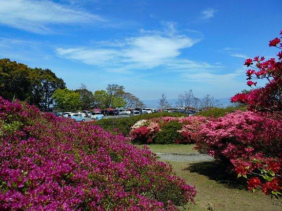 Kurume Forest Tsutsuji Park