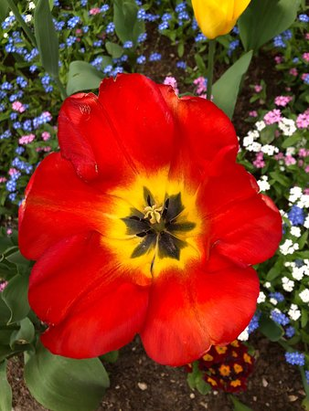 Fleurs dans le Parc de la Mairie de Roissy-en-France