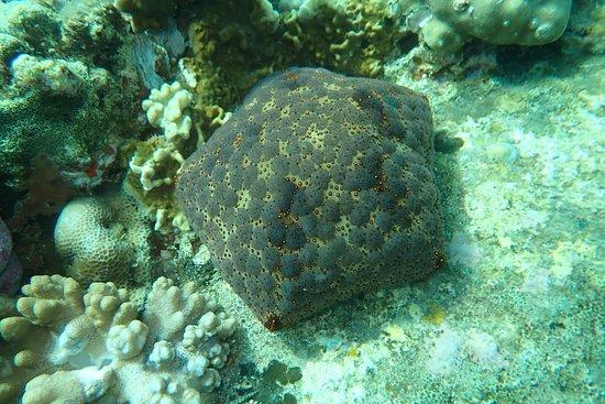 Nha Trang Sea Star: je krijgt ook een paar foto's van wat je gezien hebt onderweg