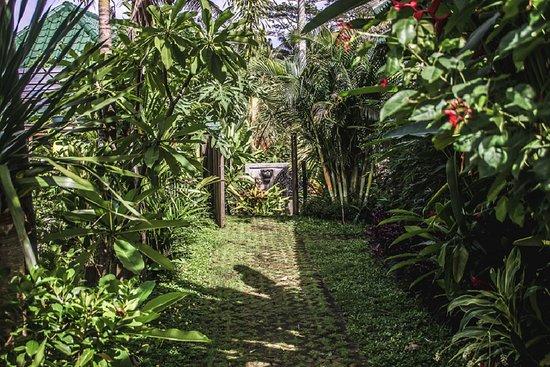 Kubu Jamu: garden