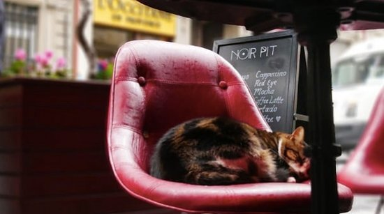 Noir Pit Coffee Co. Pera: 🐱 Noir Pit Coffee'de herkesin keyfi çok yerinde!