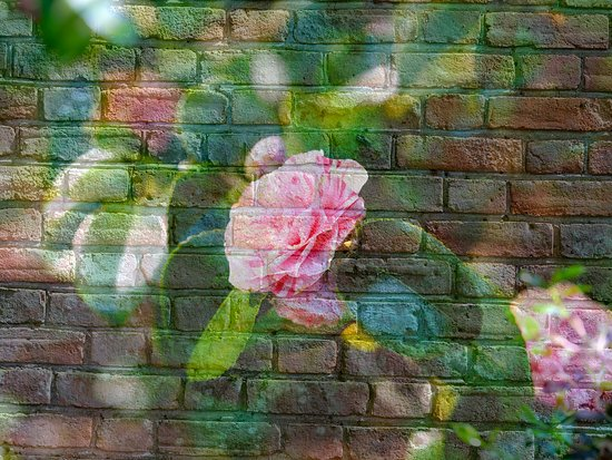 Rose and walled garden