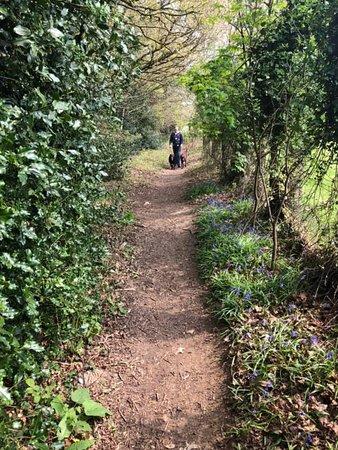 Rookesbury Park Caravan Club Site: Path leading to campsite 