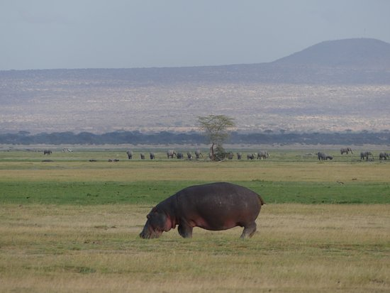 Robert Safaris Adventure Day Excusions: Amboseli - Flusspferd