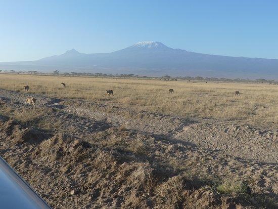 Robert Safaris Adventure Day Excusions: Amboseli - Löwenfamilie