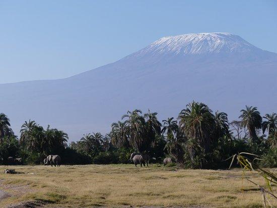 Robert Safaris Adventure Day Excusions: Blick auf den Kilimanscharo