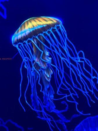 Jellyfish Museum 사진
