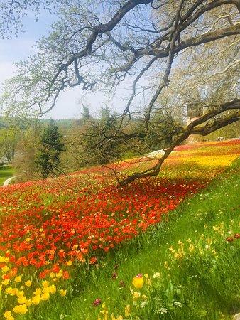 Wunderschöner Tag auf der Blumeninsel Mainau. Die Tulpen sowie viele anderen Blumen sind in voller Blüte! 🌷