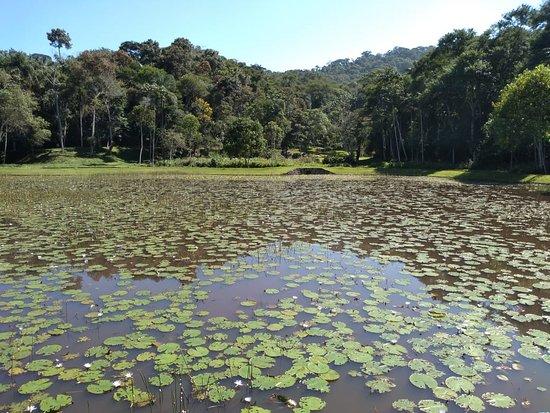 Jardim Botanico UFJF