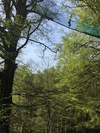 Treetop trail!!