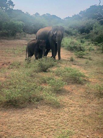 Royal Island Tours: Yala Safari