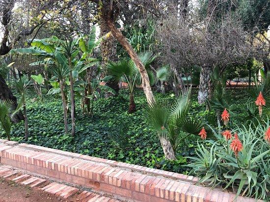 Cyber Parc Arsat Moulay Abdeslam: Vegetation