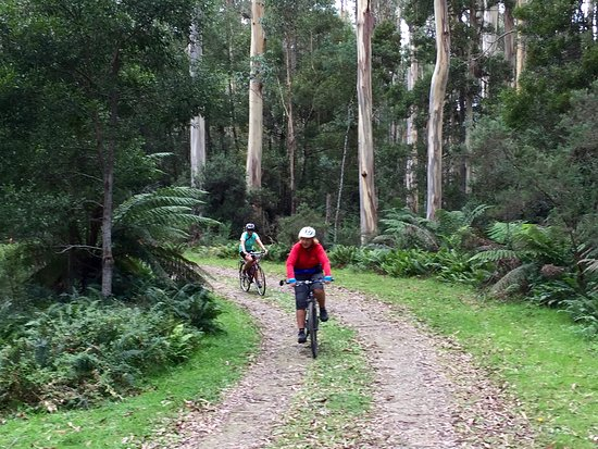 Snowy River Cycling Rail Trail Tours: Errinundra N/P  vic