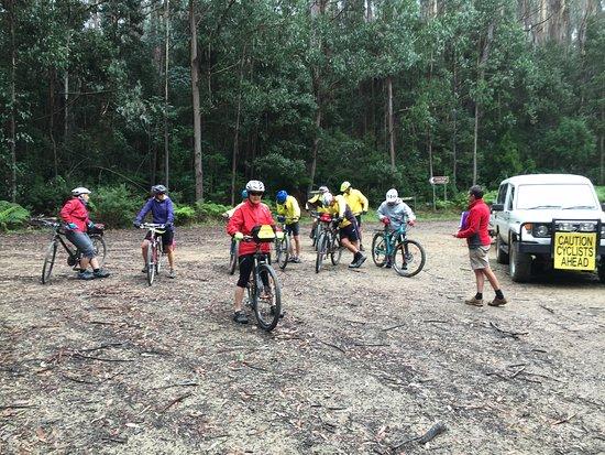 Snowy River Cycling Rail Trail Tours: Errinundra  N/P