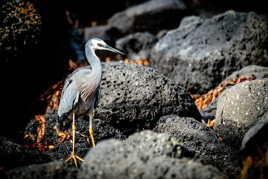 bird on Griffiths Island