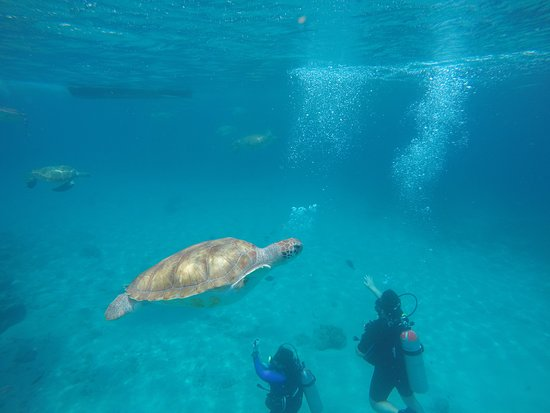 Swimming with sea turtles incl. professional pictures: There were people scuba diving while we were snorkeling.