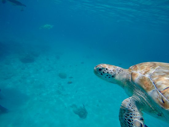 Swimming with sea turtles incl. professional pictures: :)