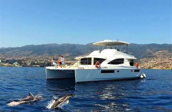 VipDolphins Luxury Whale Watching
