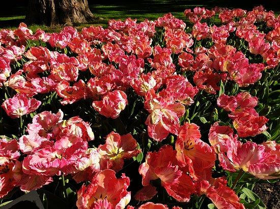 Skip the Line: Keukenhof Gardens Direct Entrance Ticket: Tulips everywhere!