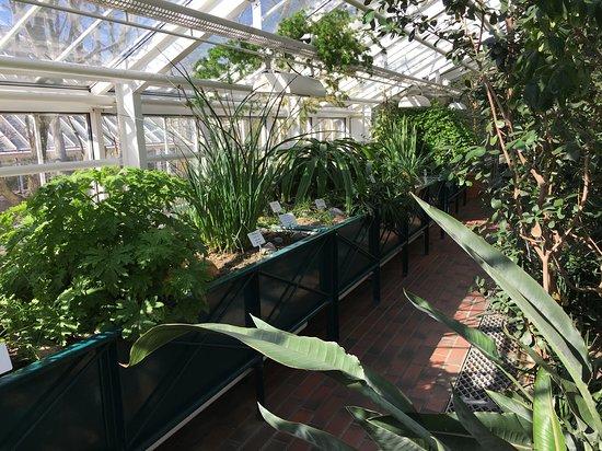 Kaisaniemi Botanic Garden 사진