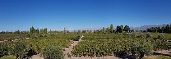Exploring Mendoza - Private Day Tours: Malbec Land