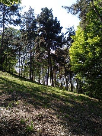 Chiesa di Santa Maria del Monte dei Cappuccini: Bosque a los pies del monte