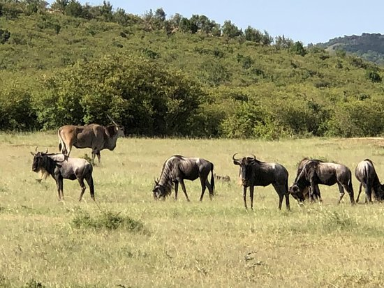 마사이마라 국립보호구 사진