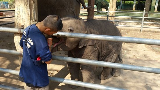Taweechai Elephant Camp照片