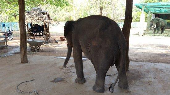Elephant 24