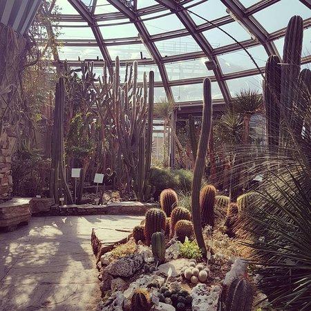 Botanischen Gartens und Botanischen Museums Berlin 사진