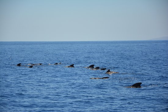 Los Gigantes Whale Watching Charter by Sail Boat: Grintwale