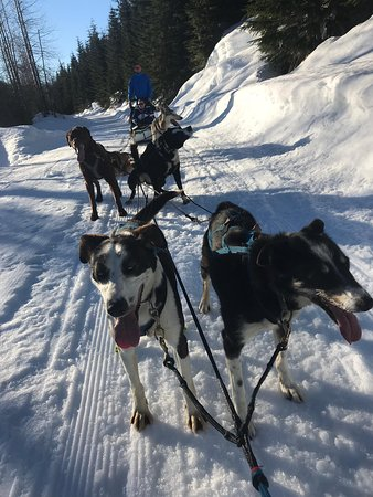 ‪‪2 Hour Wilderness Adventure Snowmobile Tour‬: Our team of dogs‬