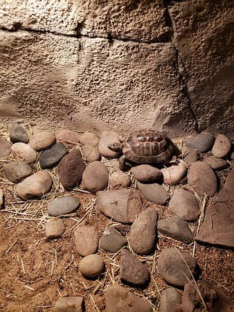SeaQuest Fort Worth: turtles