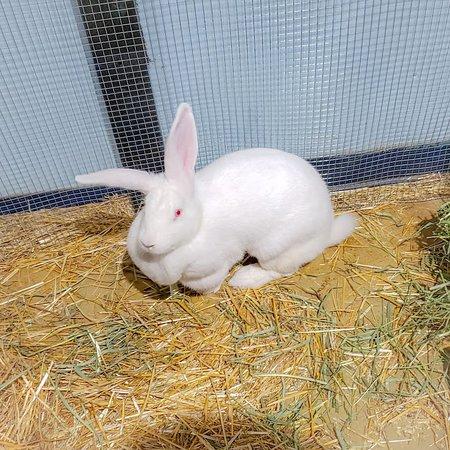 SeaQuest Fort Worth: Rabbit