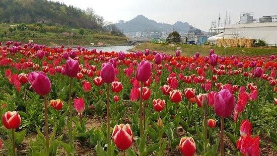 Mokpo, Sør-Korea: 삼학도