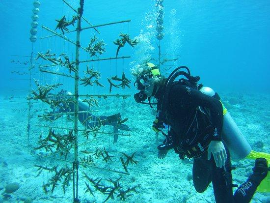 בונייר: Coral reef restoration project in Bonaire with our high school students. Every year, Blue Endeavors partners with local high schools and takes students on a global expedition to learn about coral reef restoration. The goal of these global expeditions is to teach them about ocean conservation and what they can do to be a part of the solution in saving our oceans.