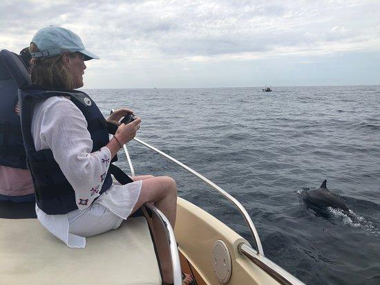 Whales In Sri Lanka