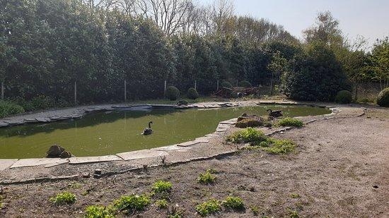 Vogel en pluimvee park  de Lorkeershoeve