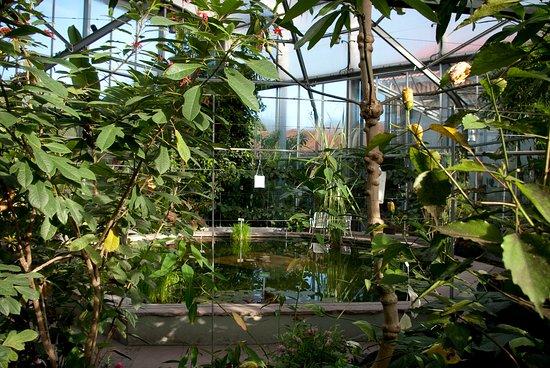 Botanischer Garten Augsburg: Tropische Wasserrosen in der Pflanzenwelt unter Glas