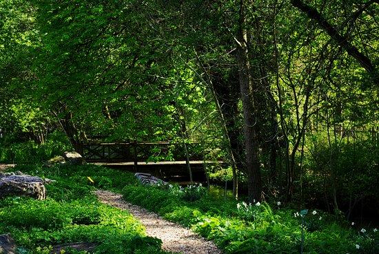 Botanischer Garten Augsburg: Natur am Bachlauf im Botanischen Garten Augsburg