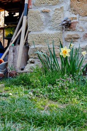 Tripadvisor - La Loggia - תמונה של Agriturismo Casa Giannino, Castel Focognano