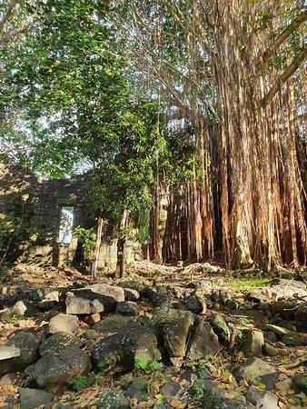 Banian tree