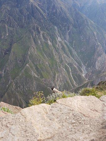 Condors at Condor Cruz